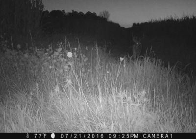 2016 - Trailcam - 059