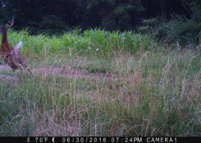 2016 - Trailcam - 084