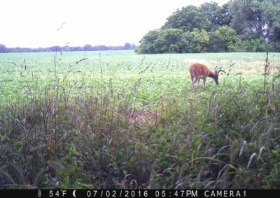 2016 - Trailcam - 114