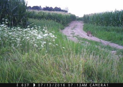 2016 - Trailcam - 118