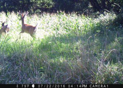 2016 - Trailcam - 138