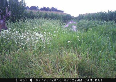 2016 - Trailcam - 141