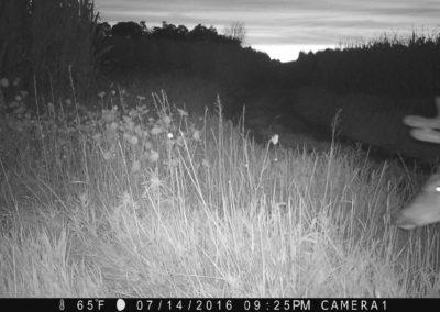 2016 - Trailcam - 147