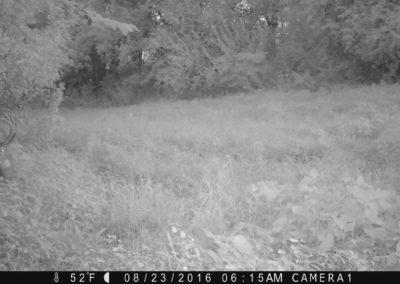 2016 - Trailcam - 219