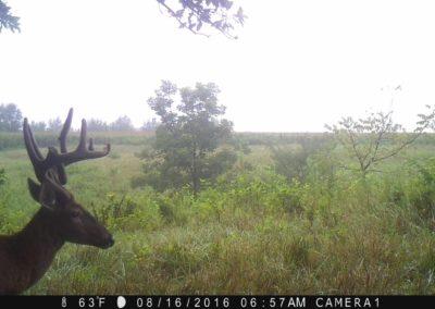 2016 - Trailcam - 249