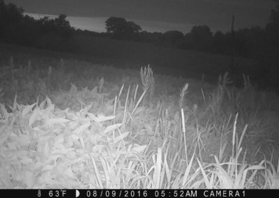 2016 - Trailcam - 355