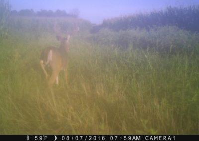 2016 - Trailcam - 362