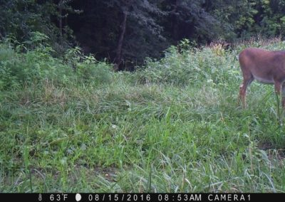 2016 - Trailcam - 363