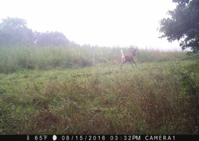 2016 - Trailcam - 366