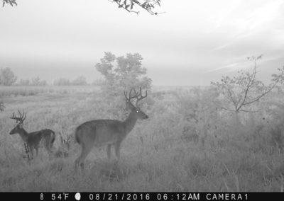 2016 - Trailcam - 386