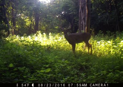 2016 - Trailcam - 425