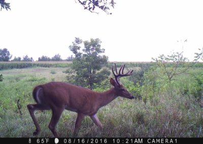 2016 - Trailcam - 444