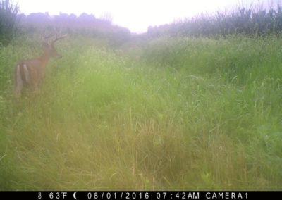 2016 - Trailcam - 448