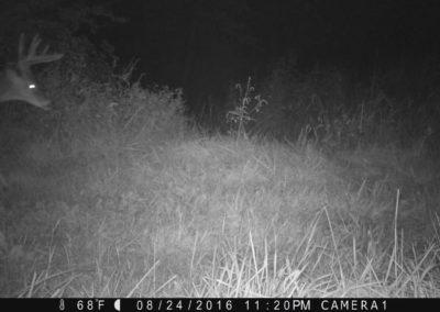 2016 - Trailcam - 452