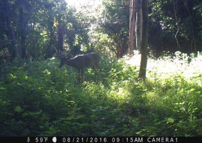 2016 - Trailcam - 474
