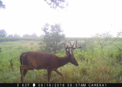 2016 - Trailcam - 486
