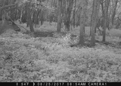 2017 - Trailcam - 096