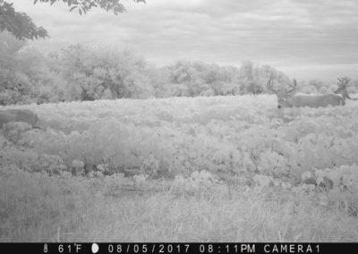 2017 - Trailcam - 141