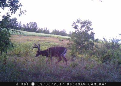 2017 - Trailcam - 145