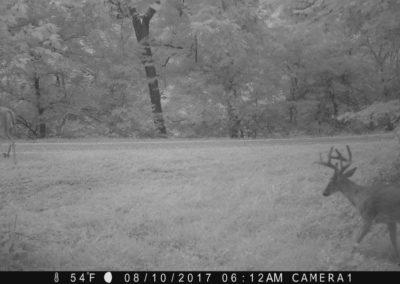 2017 - Trailcam - 147