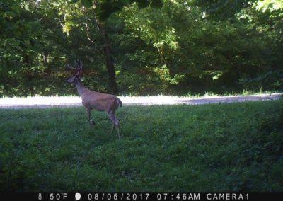 2017 - Trailcam - 157