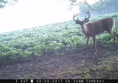 2017 - Trailcam - 158