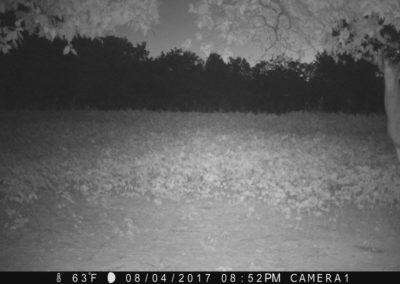 2017 - Trailcam - 167
