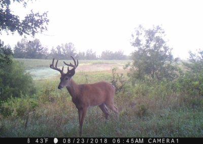 2018 - Trailcam - 031
