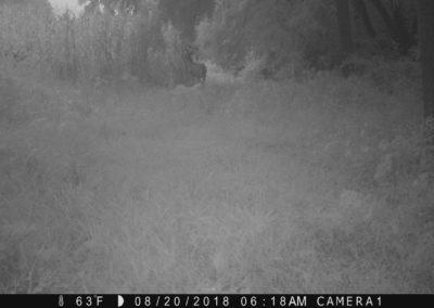 2018 - Trailcam - 035