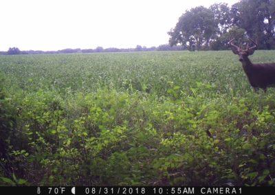 2018 - Trailcam - 105