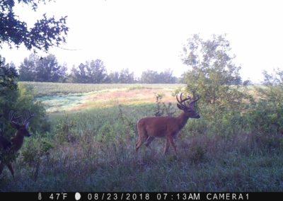 2018 - Trailcam - 142
