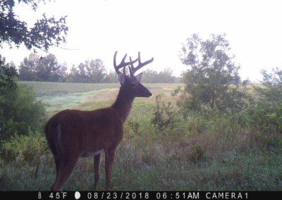 2018 - Trailcam - 154