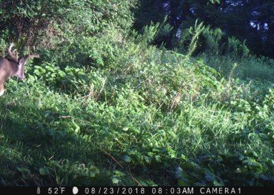 2018 - Trailcam - 164