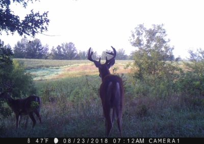 2018 - Trailcam - 168
