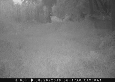 2018 - Trailcam - 186