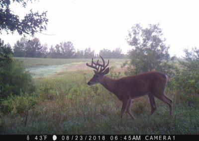 2018 - Trailcam - 215