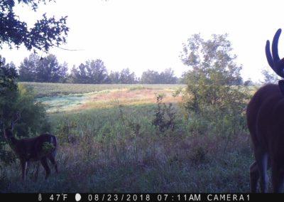 2018 - Trailcam - 257