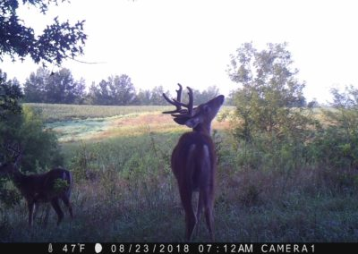 2018 - Trailcam - 274