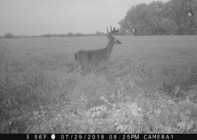 2018 - Trailcam - 278