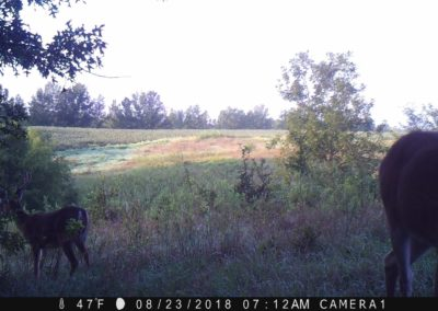 2018 - Trailcam - 279