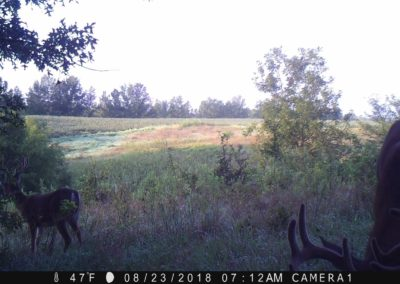 2018 - Trailcam - 289