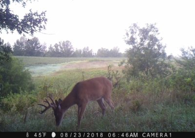 2018 - Trailcam - 324