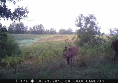 2018 - Trailcam - 334