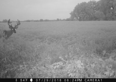 2018 - Trailcam - 340