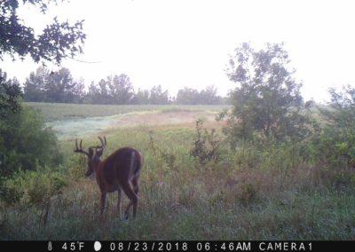 2018 - Trailcam - 352