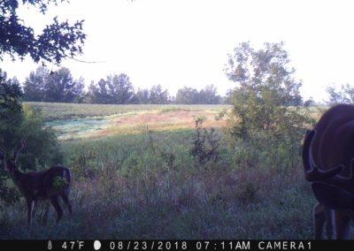 2018 - Trailcam - 356