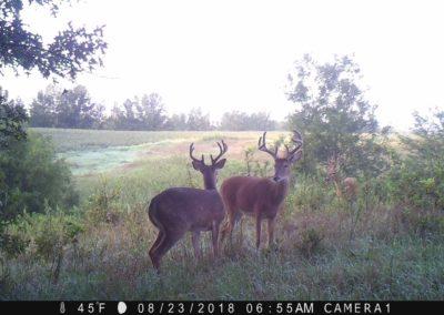 2018 - Trailcam - 359