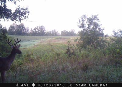 2018 - Trailcam - 363