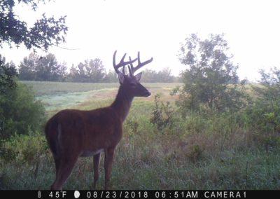 2018 - Trailcam - 380