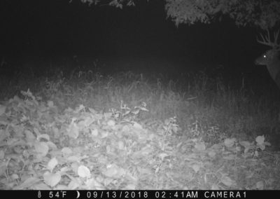 2018 - Trailcam - 428